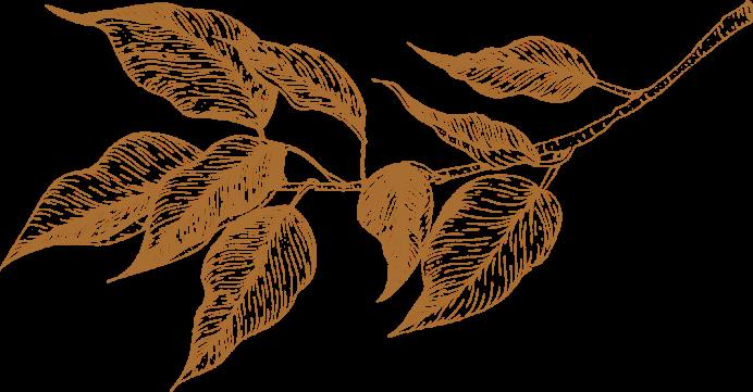 plante-vintage-fond