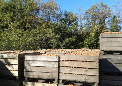 palox-pommes-400x284