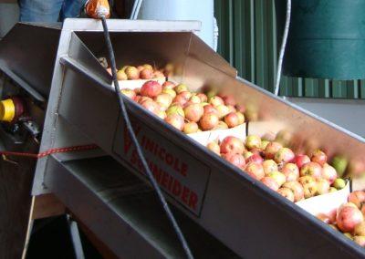 pommes-tapis-400x284